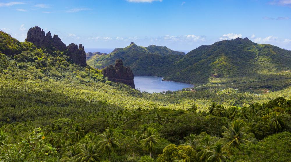 vegetation cruise in polynesia