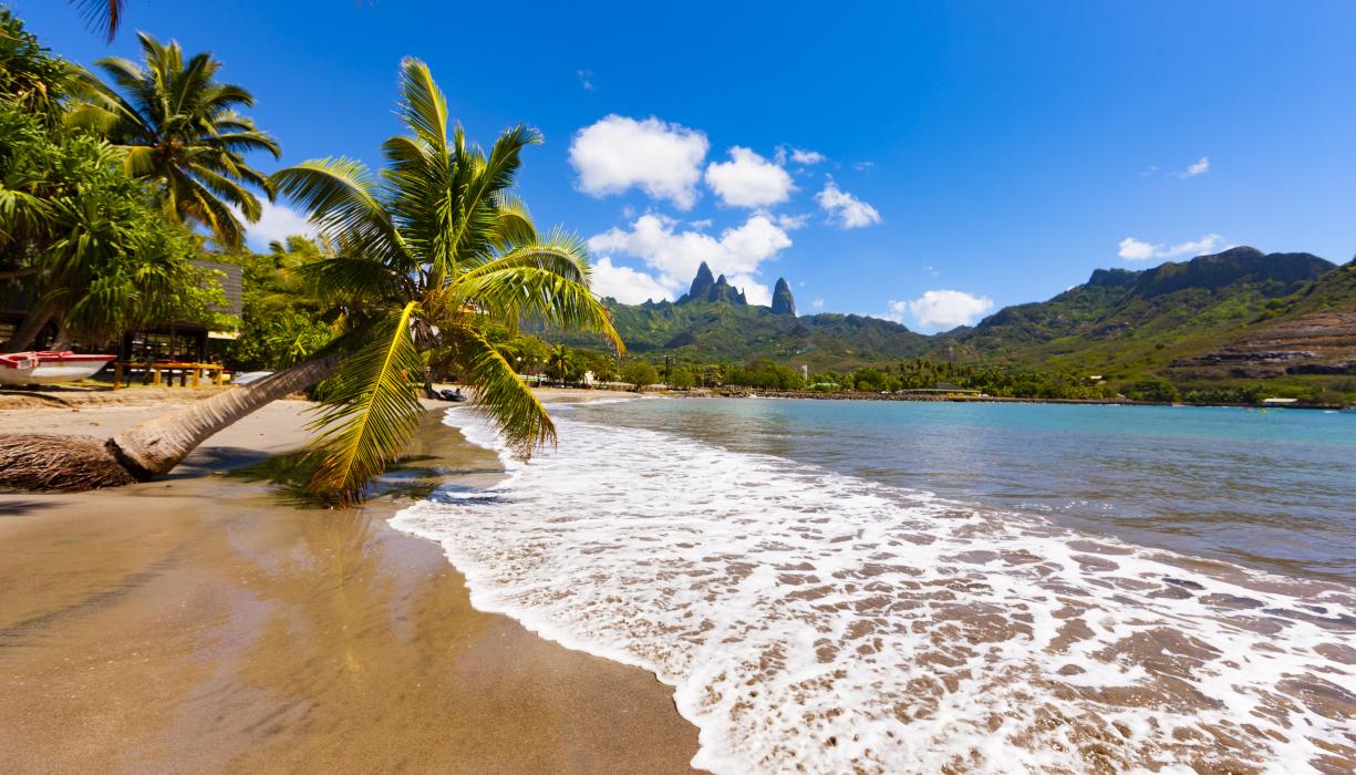 palmier couché et mer iles marquises