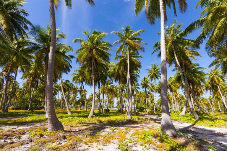 palmiers croisière iles marquises
